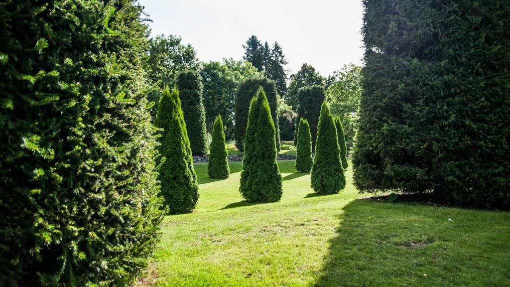 The greens of School Garden